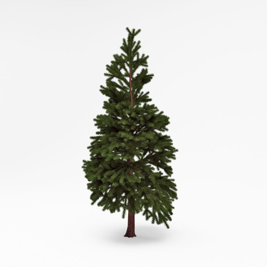 Conifer 022 royalty-free 3d model - Preview no. 3