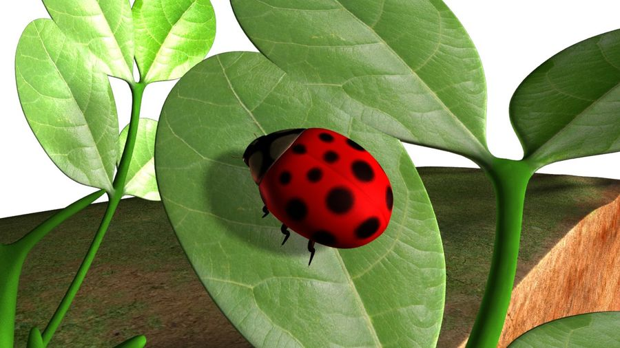 Lady bug royalty-free 3d model - Preview no. 2
