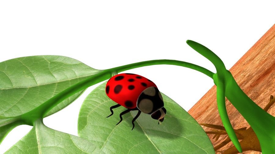 Lady bug royalty-free 3d model - Preview no. 4
