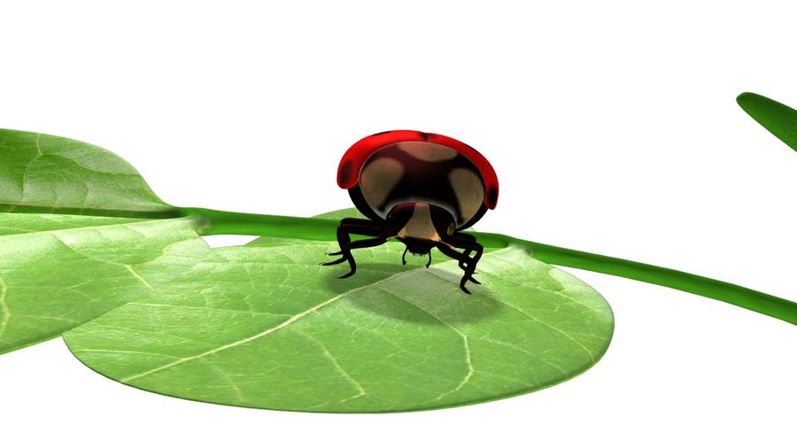 Lady bug royalty-free 3d model - Preview no. 5