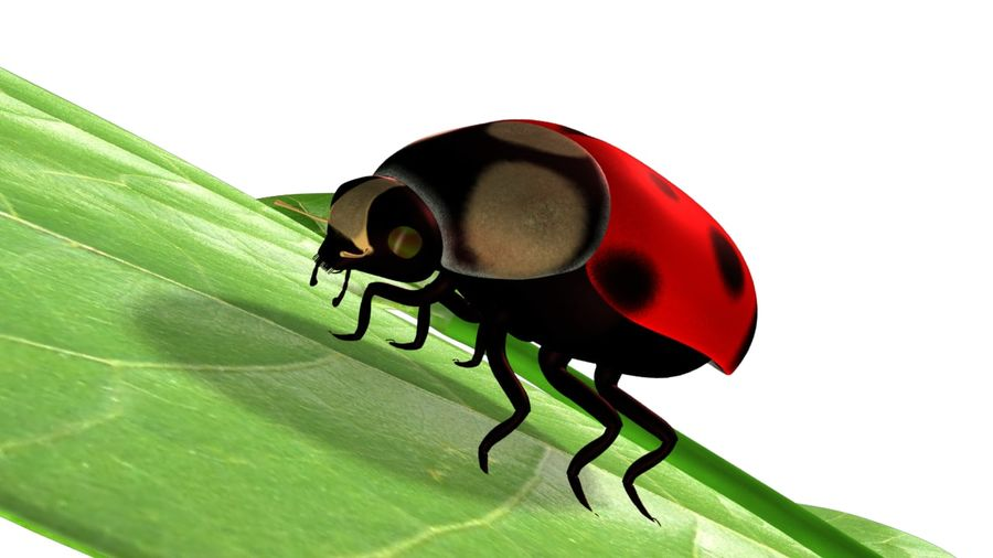 Lady bug royalty-free 3d model - Preview no. 1