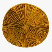 真菌珊瑚 3d model