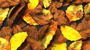 분해 된 잎 3d model