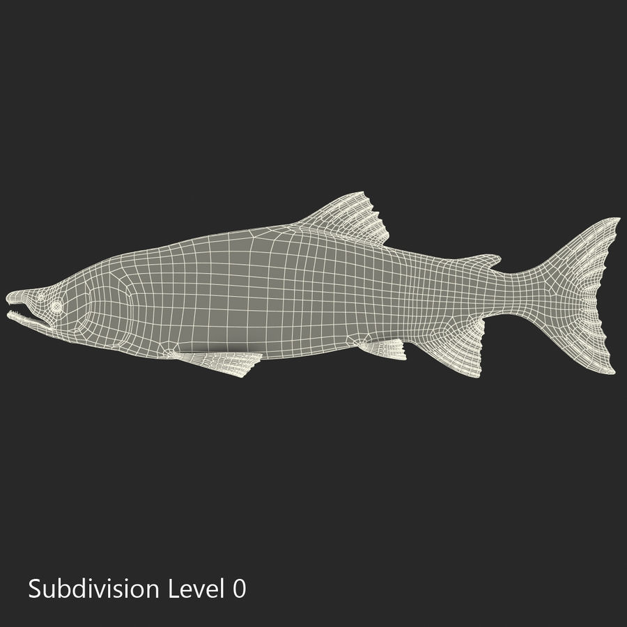 Sockeye Somon Balığı royalty-free 3d model - Preview no. 24