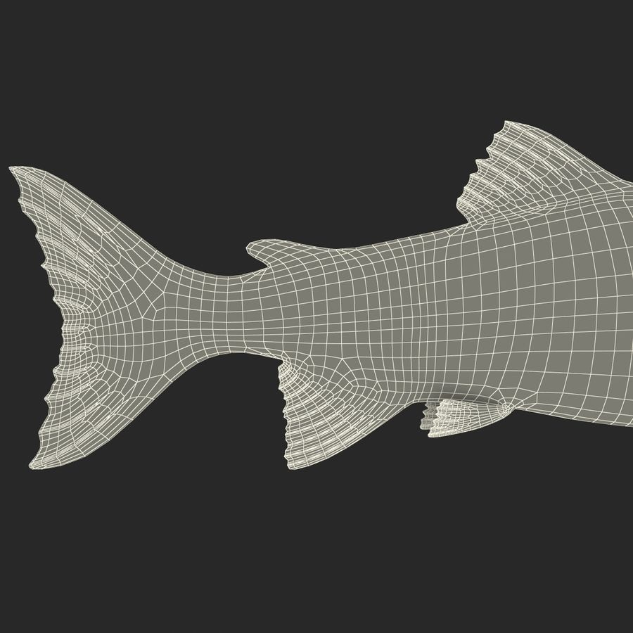 Sockeye Somon Balığı royalty-free 3d model - Preview no. 22