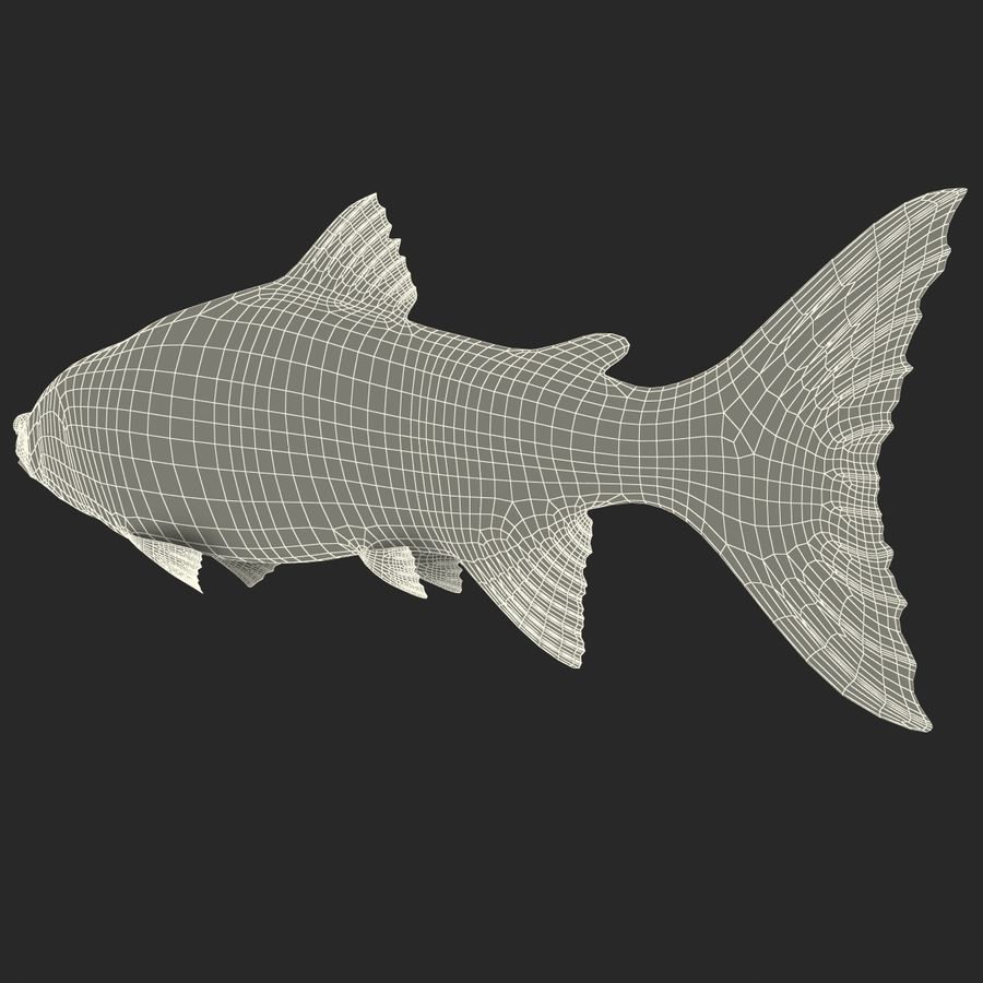 Sockeye Somon Balığı royalty-free 3d model - Preview no. 23