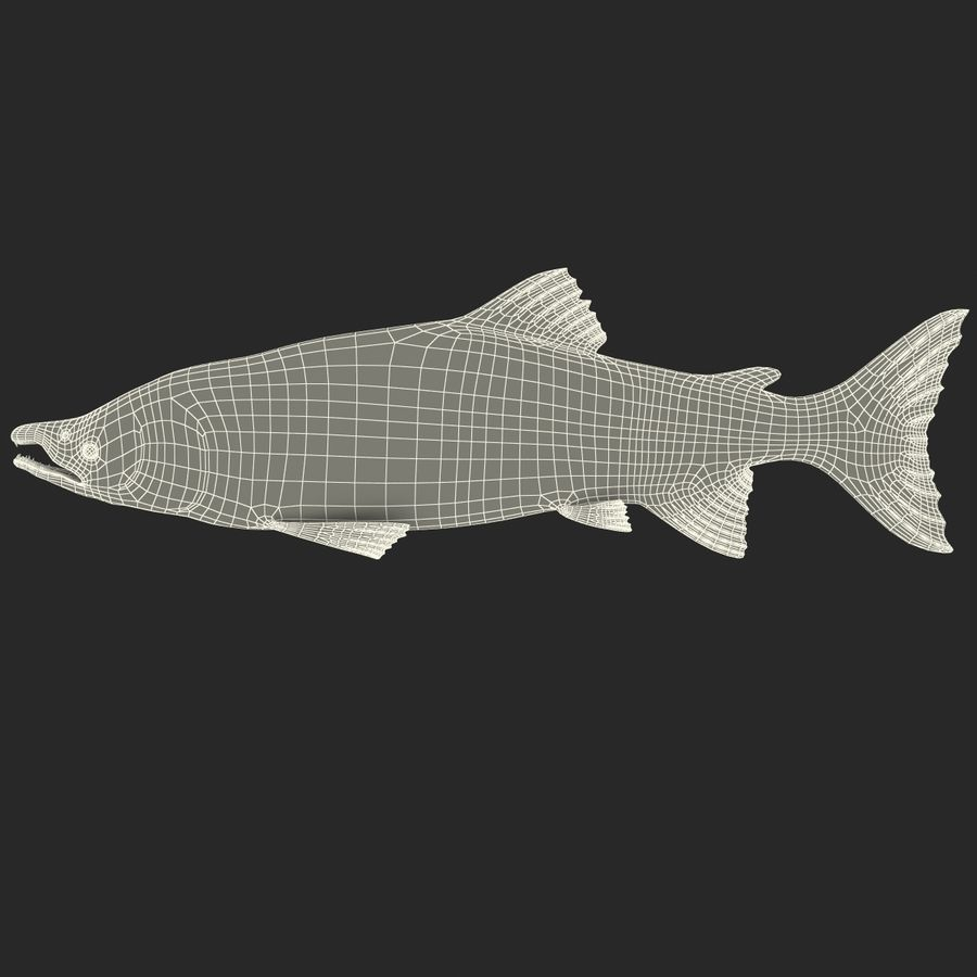 Sockeye Somon Balığı royalty-free 3d model - Preview no. 19