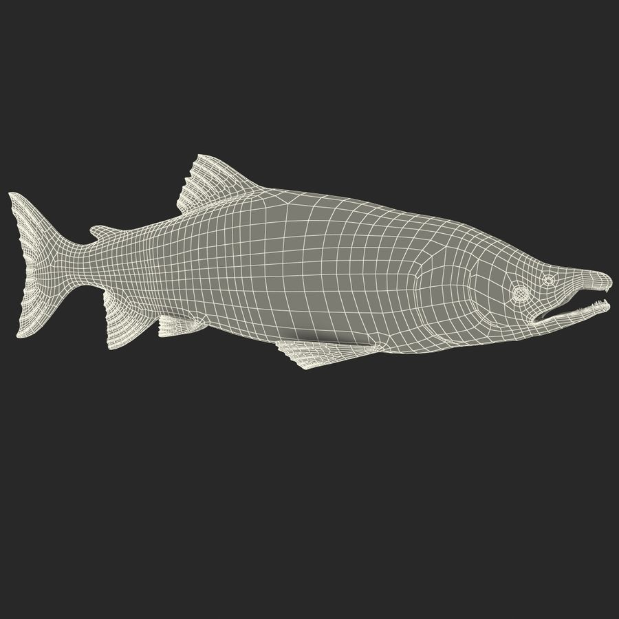 Sockeye Somon Balığı royalty-free 3d model - Preview no. 20