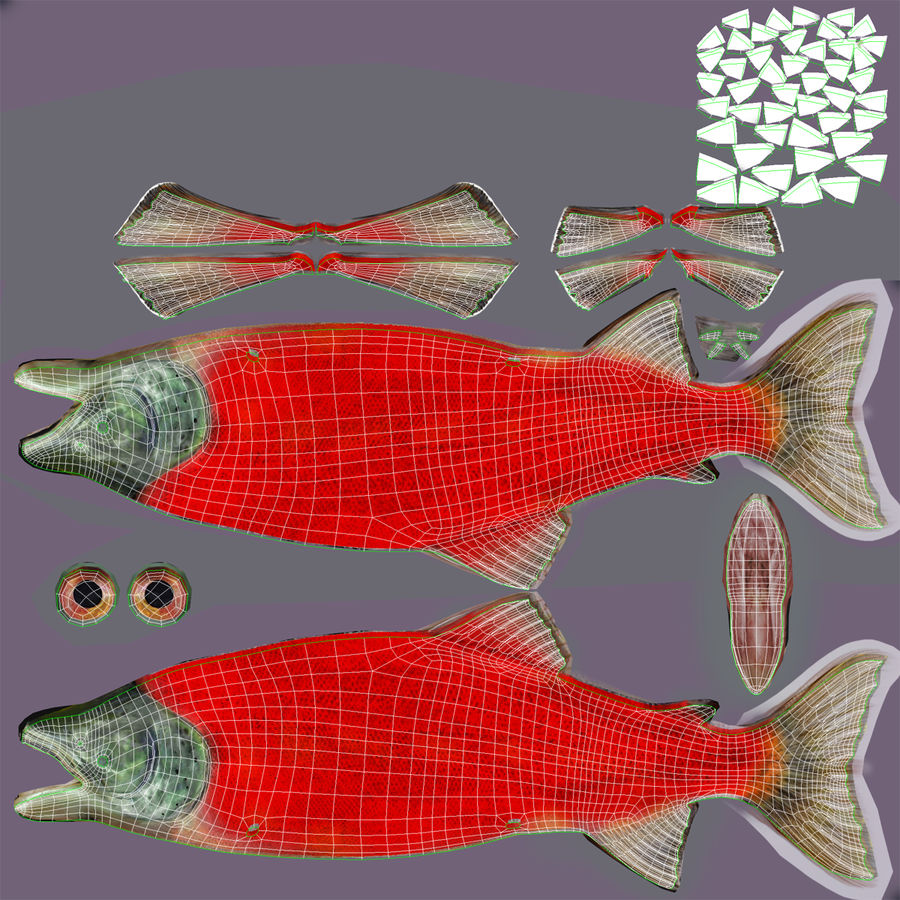 Sockeye Somon Balığı royalty-free 3d model - Preview no. 26