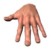Mannelijke menselijke hand 3d model