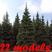 针叶树系列 3d model
