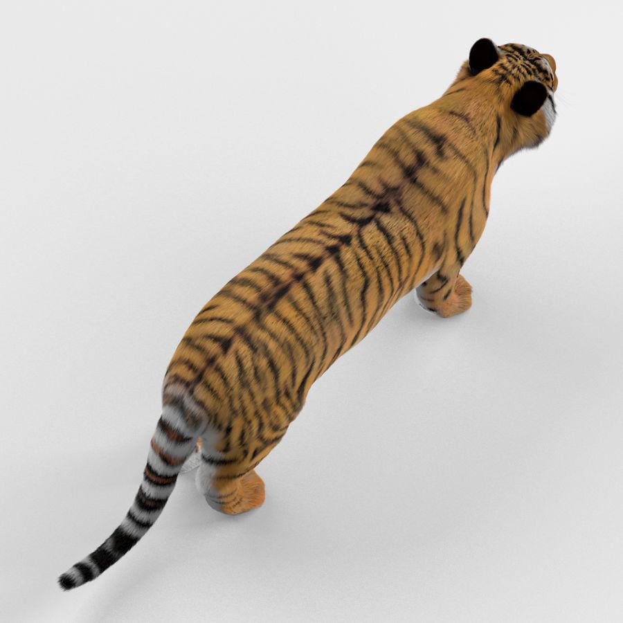 Tigre (pele) royalty-free 3d model - Preview no. 7