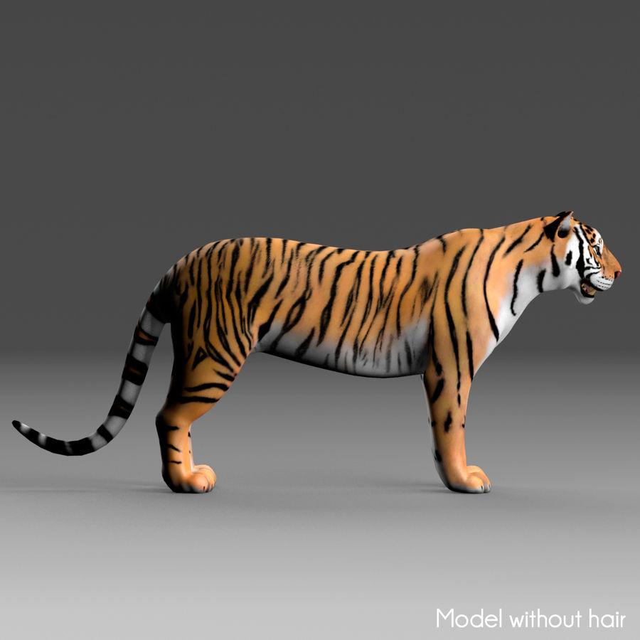 Tigre (pele) royalty-free 3d model - Preview no. 22