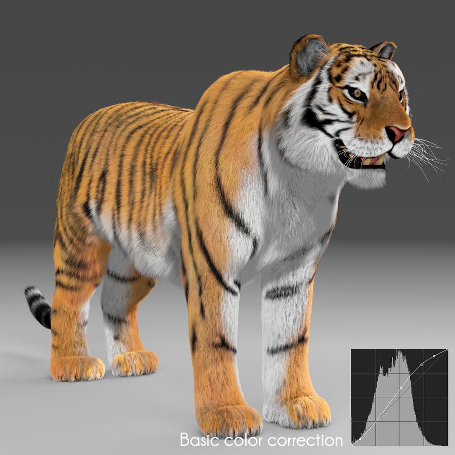 Tigre (pele) royalty-free 3d model - Preview no. 21