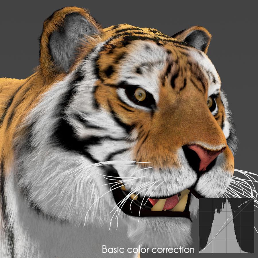 Tigre (pele) royalty-free 3d model - Preview no. 8