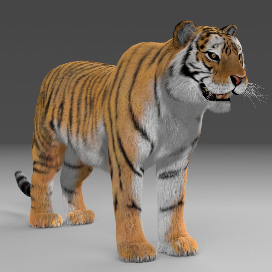 Tigre (pele) royalty-free 3d model - Preview no. 4