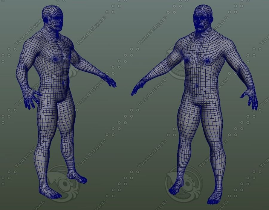 Męskiej anatomii człowieka High Poly royalty-free 3d model - Preview no. 2