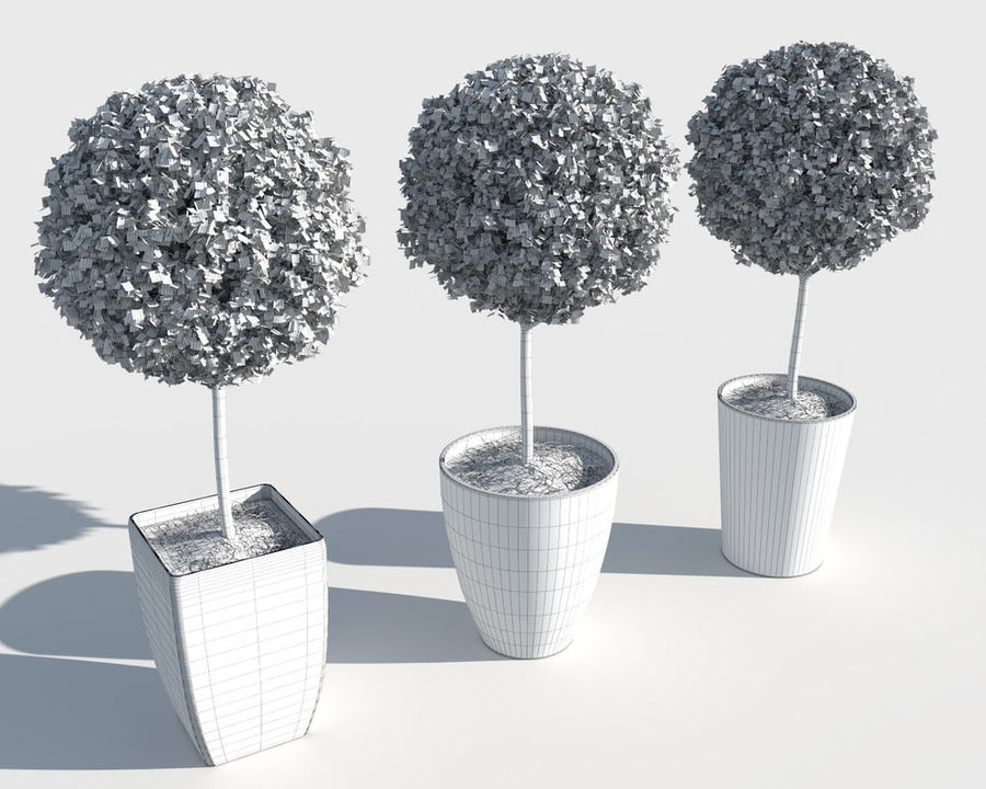Outdoor Plants: Boxwood Trees royalty-free 3d model - Preview no. 10