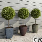 Rośliny ogrodowe: drzewa bukszpanu 3d model