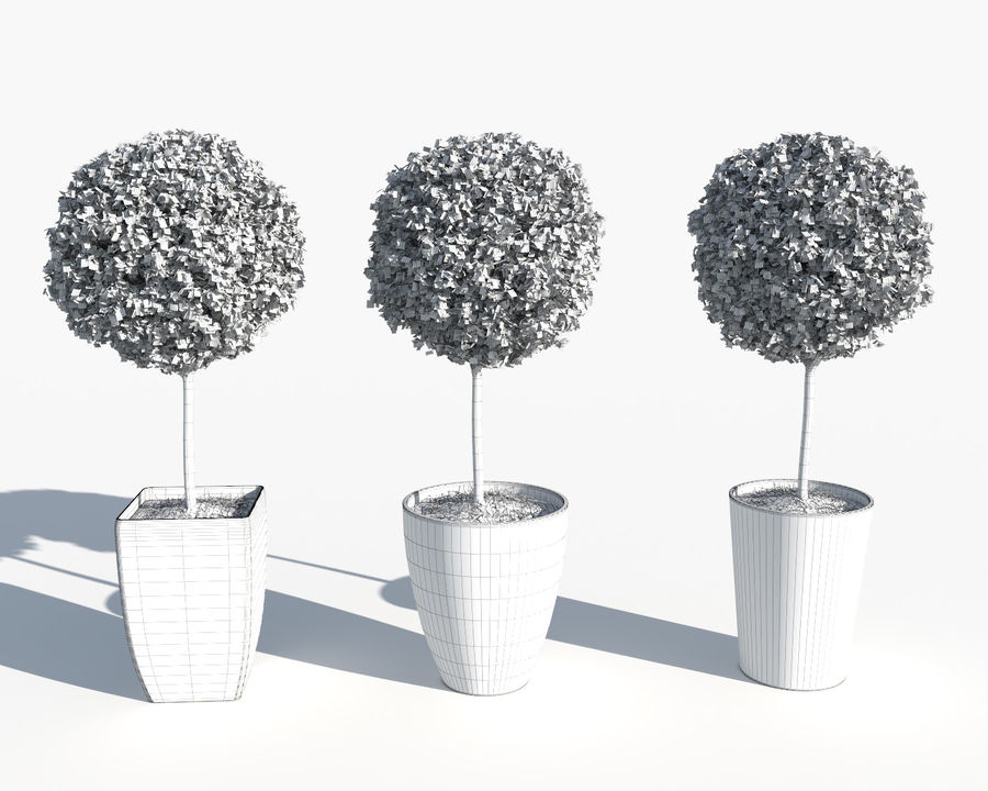 Outdoor Plants: Boxwood Trees royalty-free 3d model - Preview no. 9