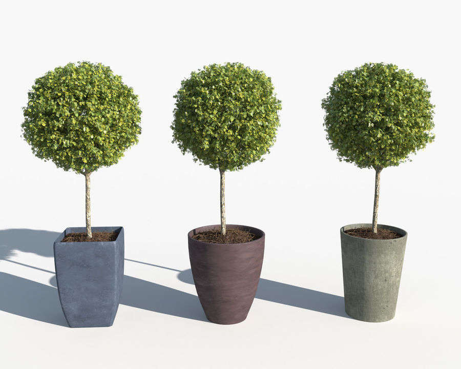 Outdoor Plants: Boxwood Trees royalty-free 3d model - Preview no. 6