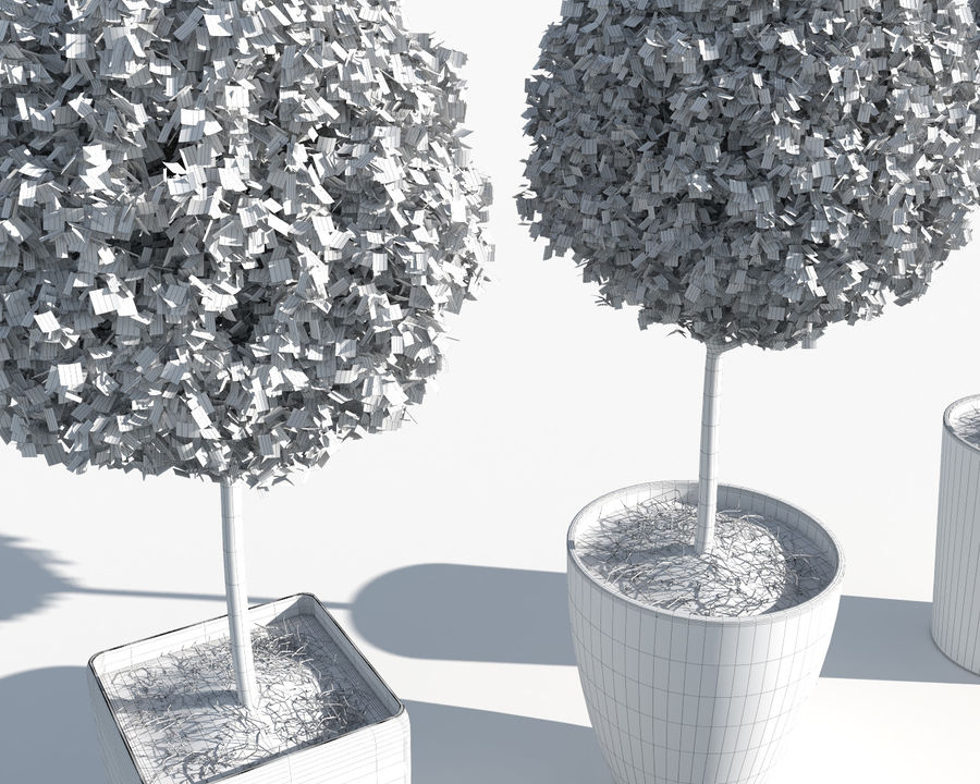 Outdoor Plants: Boxwood Trees royalty-free 3d model - Preview no. 12