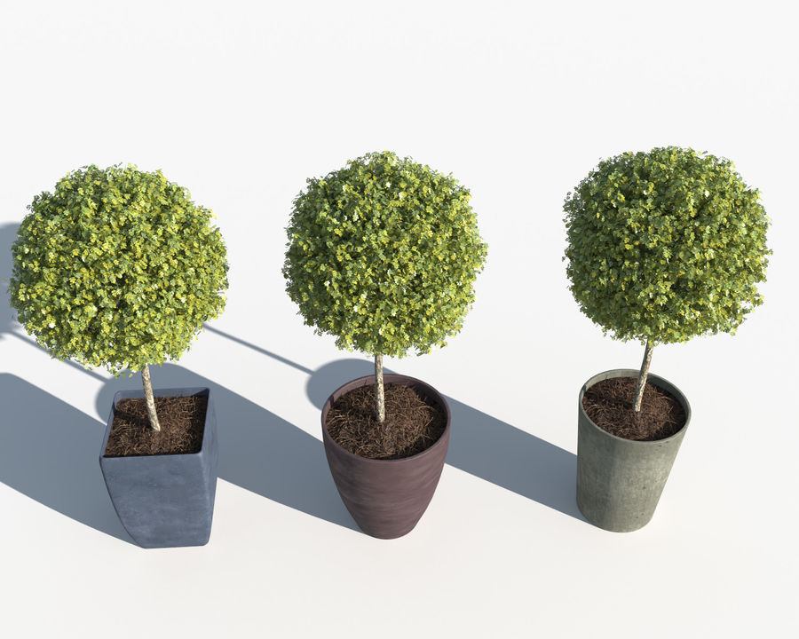 Outdoor Plants: Boxwood Trees royalty-free 3d model - Preview no. 7