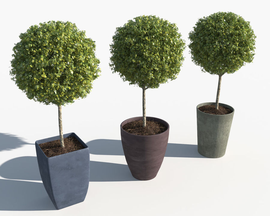 Outdoor Plants: Boxwood Trees royalty-free 3d model - Preview no. 5