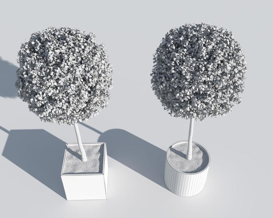 Plantes d'extérieur 2: arbres de buis royalty-free 3d model - Preview no. 8