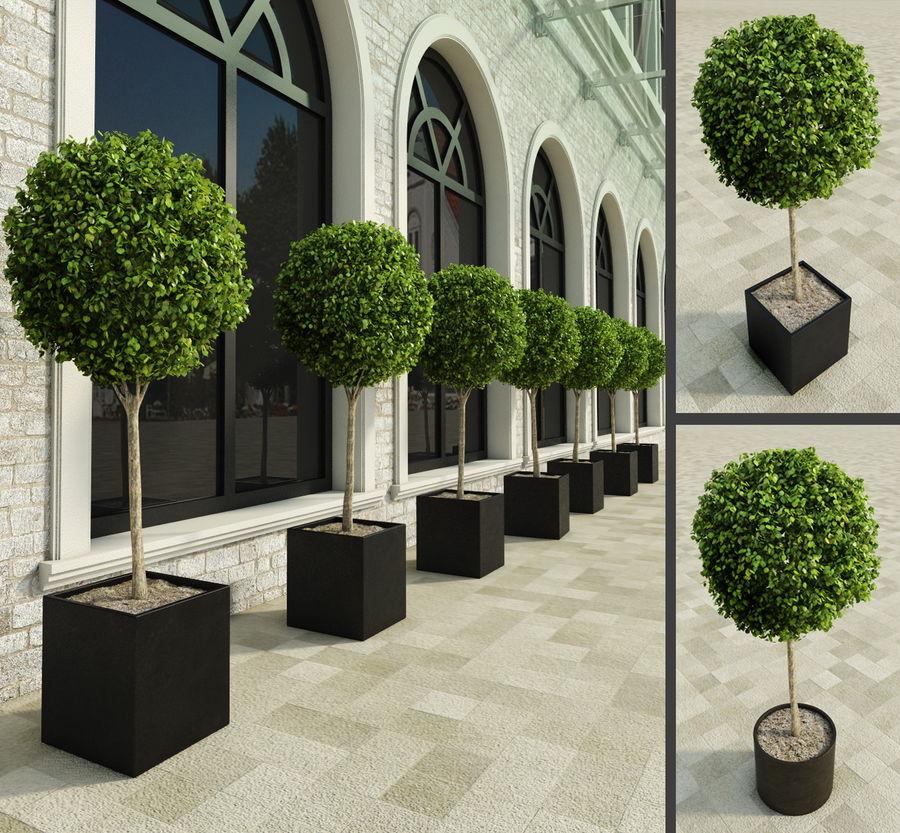 Plantes d'extérieur 2: arbres de buis royalty-free 3d model - Preview no. 1