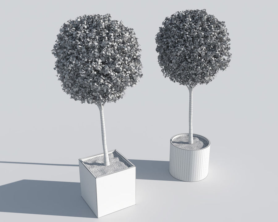 Outdoor Plants 2: Boxwood Trees royalty-free 3d model - Preview no. 6