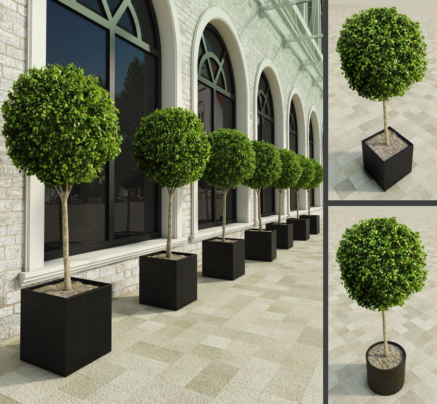 Outdoor Plants 2: Boxwood Trees royalty-free 3d model - Preview no. 1