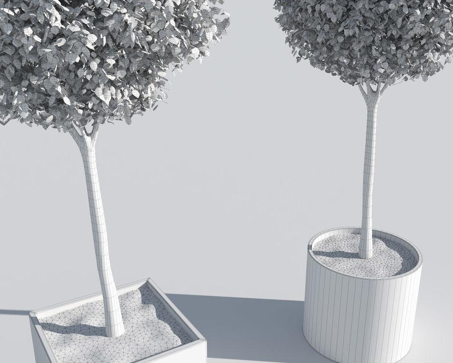 Plantes d'extérieur 2: arbres de buis royalty-free 3d model - Preview no. 9