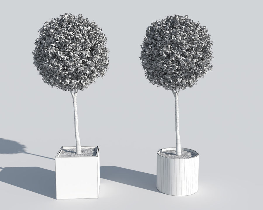 Plantes d'extérieur 2: arbres de buis royalty-free 3d model - Preview no. 7