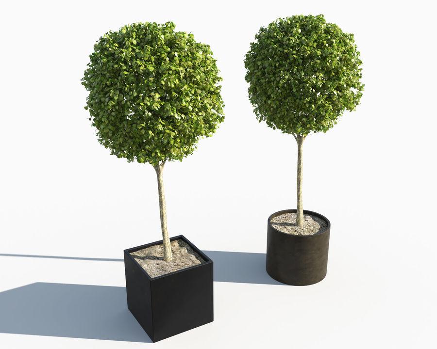 Plantes d'extérieur 2: arbres de buis royalty-free 3d model - Preview no. 2