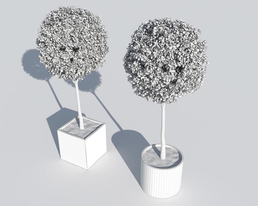 Plantes d'extérieur 2: arbres de buis royalty-free 3d model - Preview no. 10