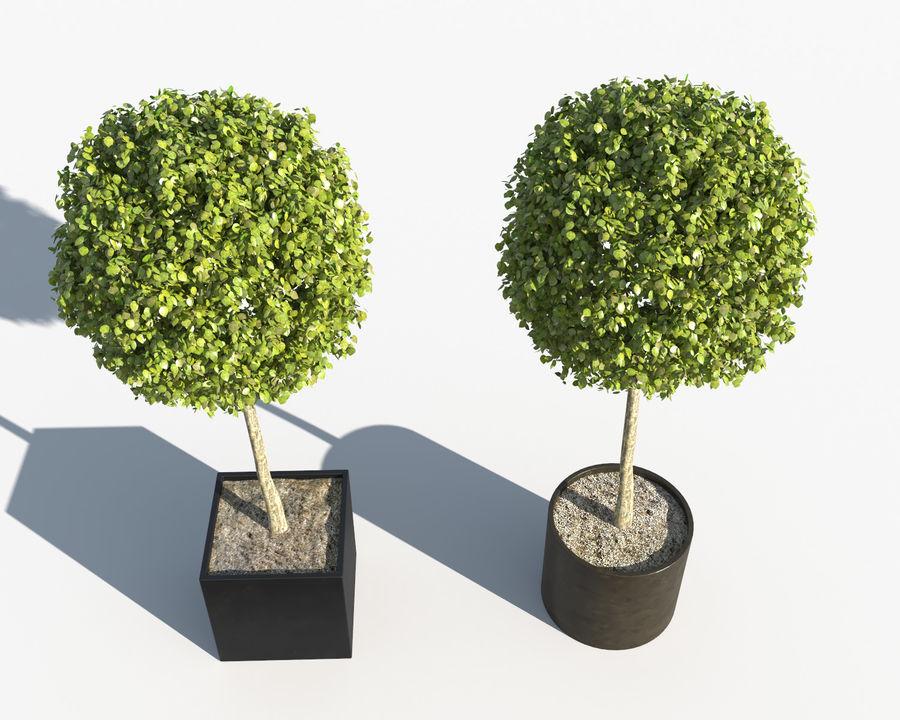 Plantes d'extérieur 2: arbres de buis royalty-free 3d model - Preview no. 4