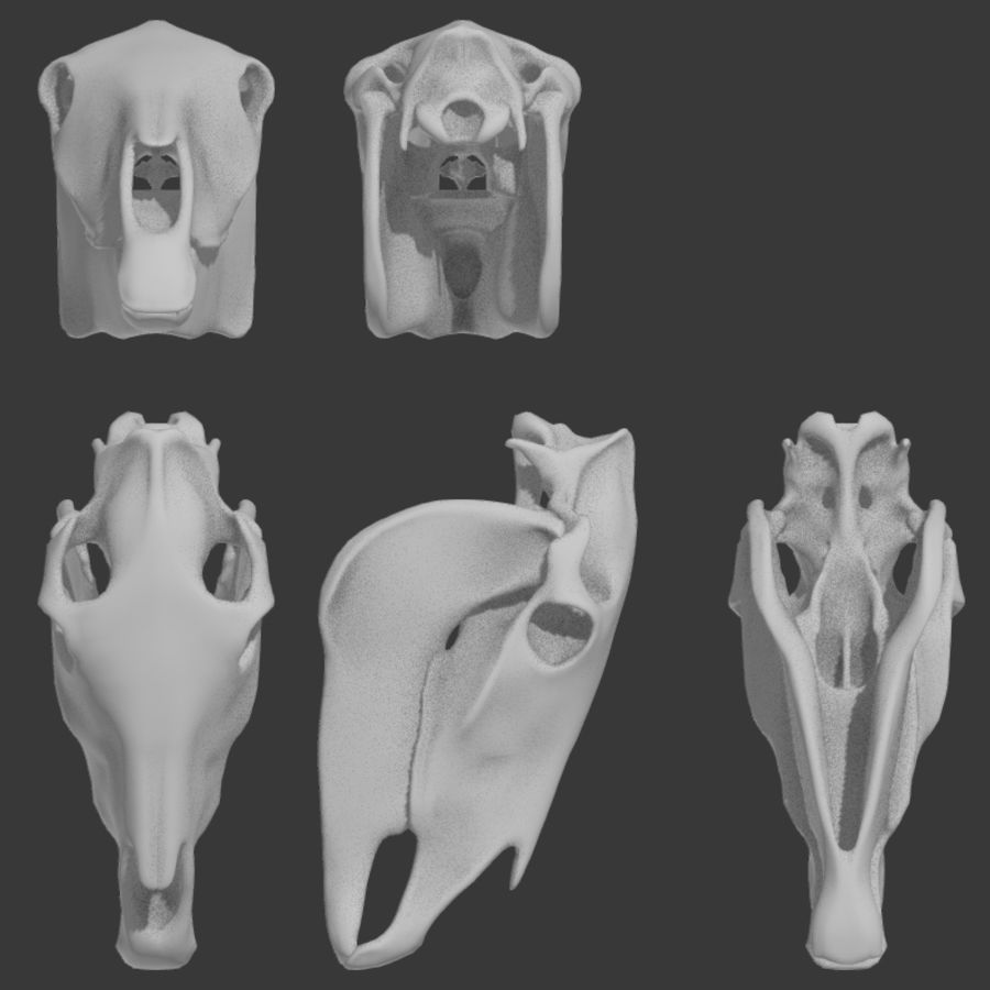 Horse Skull royalty-free 3d model - Preview no. 5