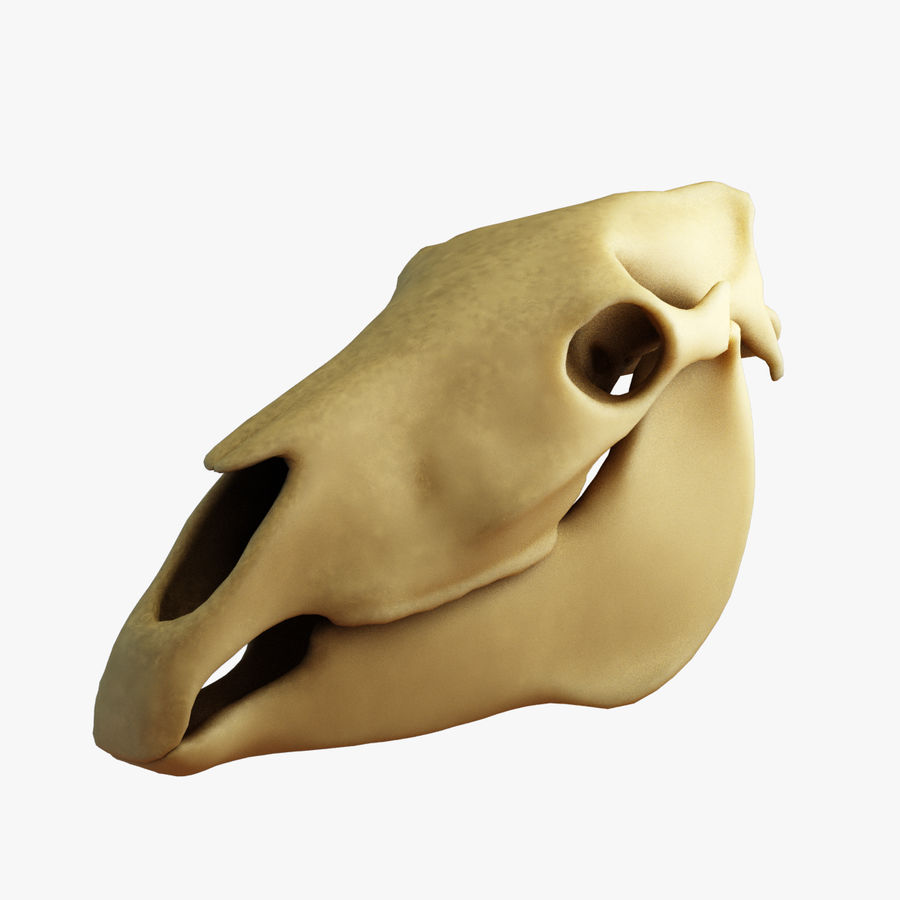 Horse Skull royalty-free 3d model - Preview no. 1