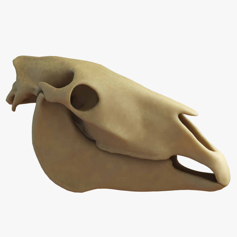 Horse Skull royalty-free 3d model - Preview no. 4