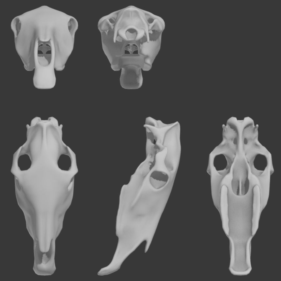 Horse Skull royalty-free 3d model - Preview no. 7