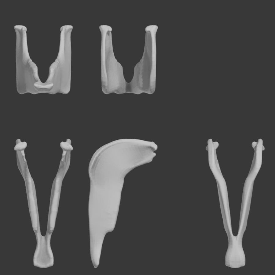 Horse Skull royalty-free 3d model - Preview no. 9