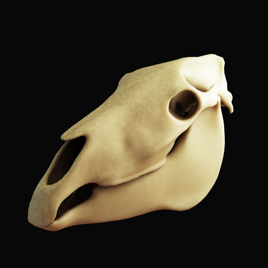 Horse Skull royalty-free 3d model - Preview no. 2