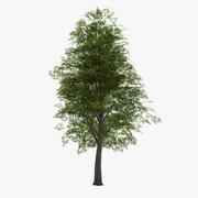 Liściasty 022 3d model