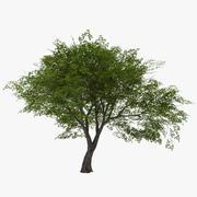 Liściasty 021 3d model