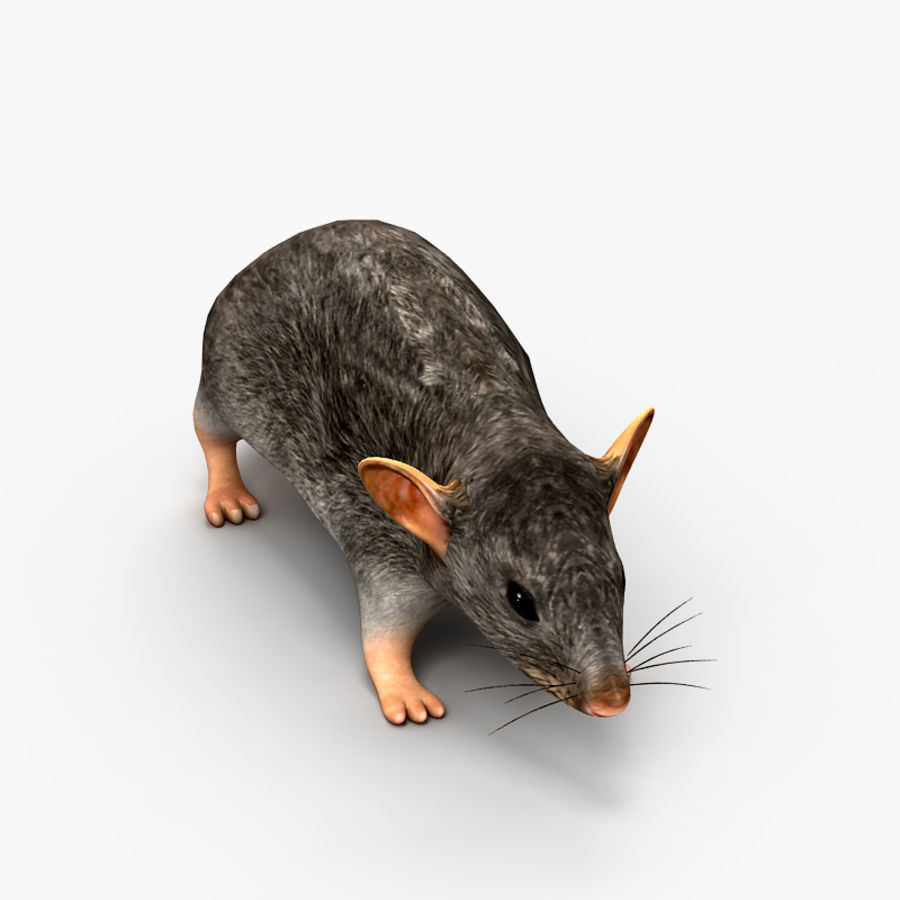 Rat Mouse 2 royalty-free 3d model - Preview no. 3