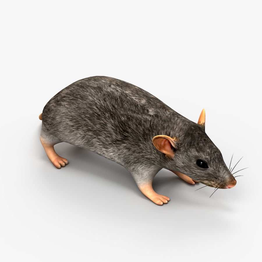 Rat Mouse 2 royalty-free 3d model - Preview no. 4