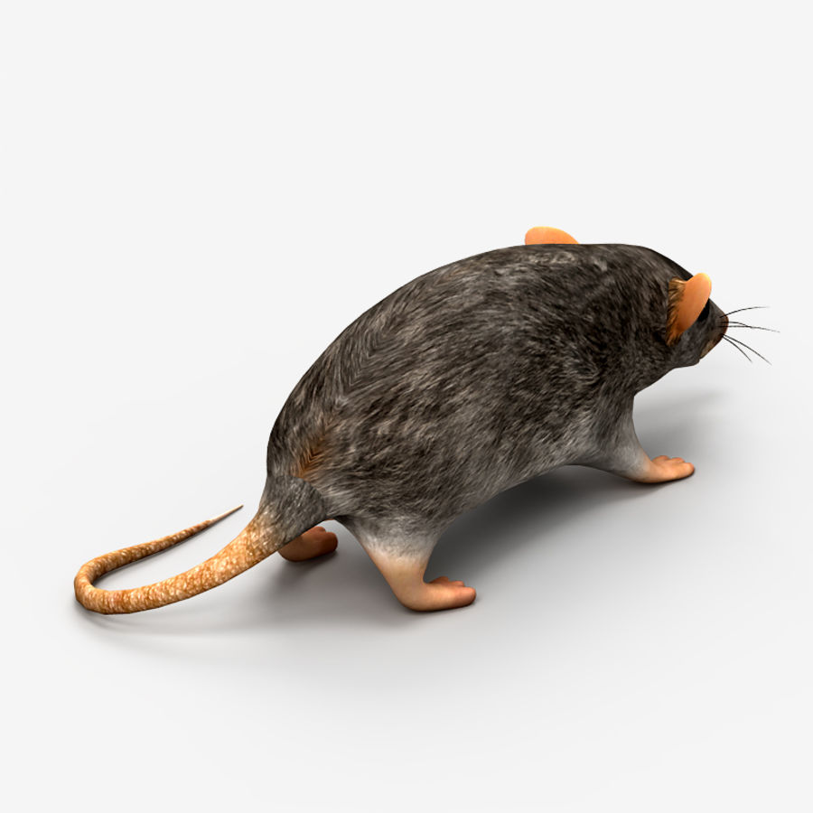 Rat Mouse 2 royalty-free 3d model - Preview no. 5