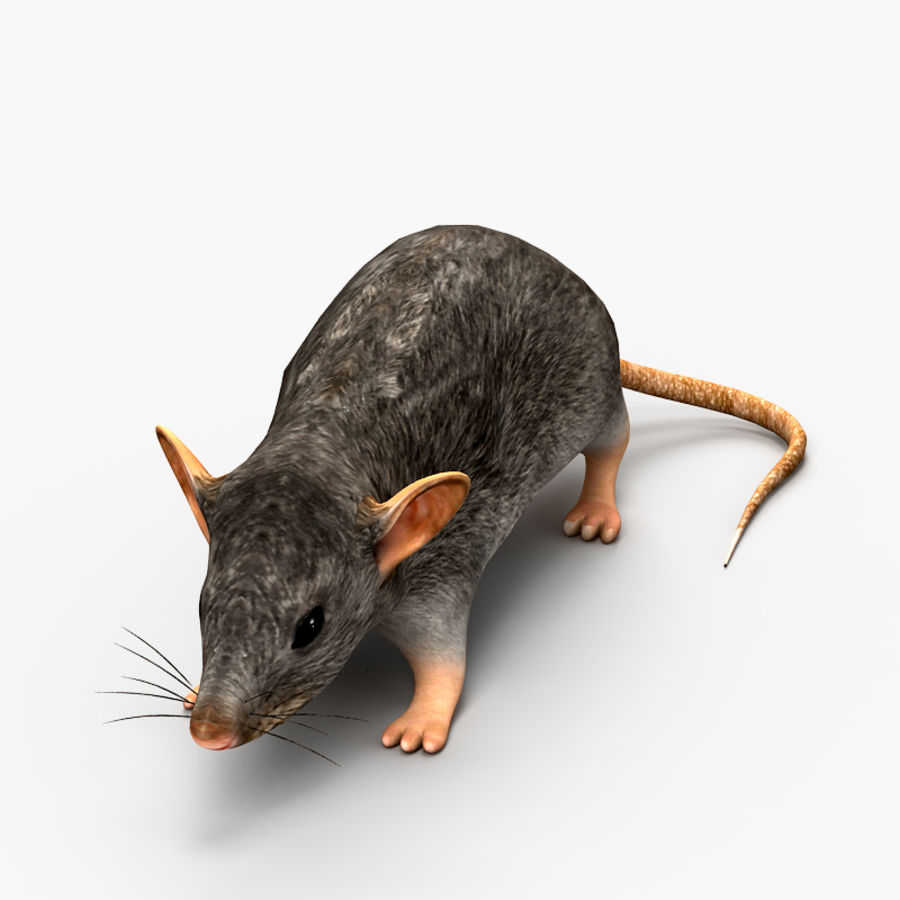 Rat Mouse 2 royalty-free 3d model - Preview no. 2