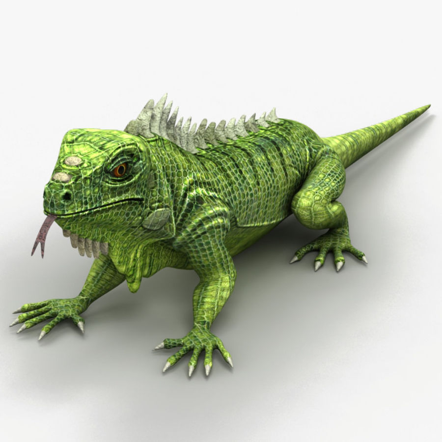 Iguana 2 royalty-free 3d model - Preview no. 1